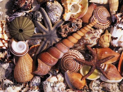 Elementos marinhos usados na decoração