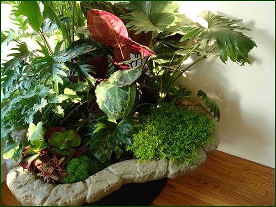 Plantas de interior - Clases de plantas de interior ...