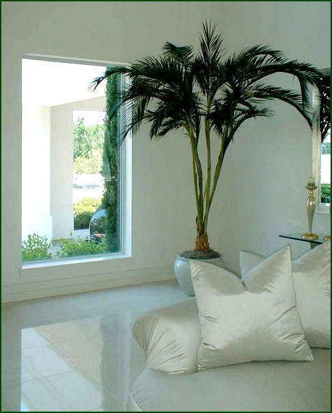 Index of wp content uploads 2011 05 for Casas decoradas con plantas de interior