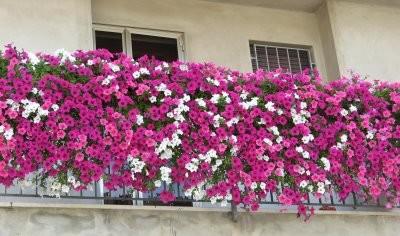 jardins de varanda e jardins em terraços
