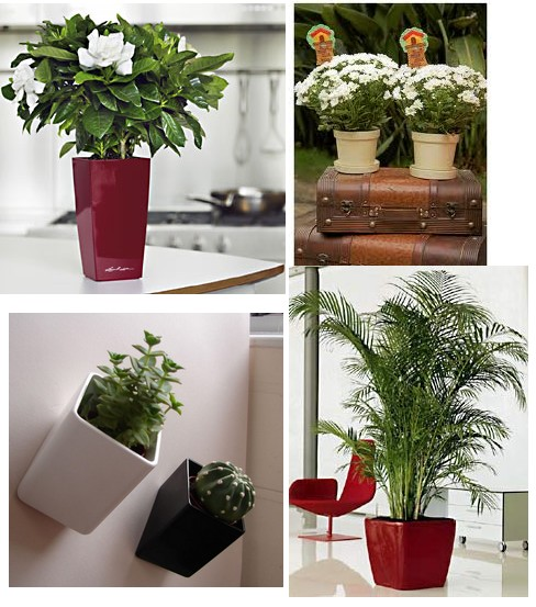 Cuidar de plantas de interior for Plantas decorativas para interiores