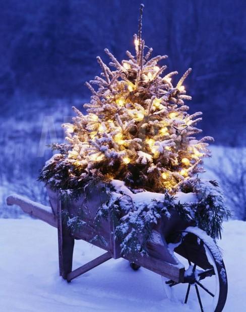 decorar-seu-jardim-com-luzes-de-natal-11
