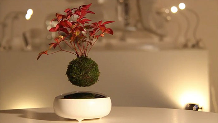 air bonsai