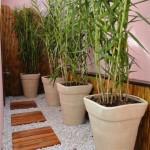 Jardins de inverno com vasos