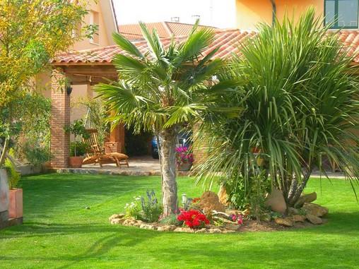 Jardins decorados com palmeiras Decoraciones para jardines de casas
